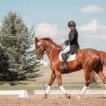 Exploring the benefits of glue on shoes for your horse