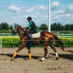 The importance of bell boots in a horse's health and how to choose the best
